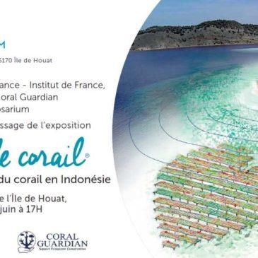 Coeur de Corail : exposition sur le sauvetage du corail en Indonésie