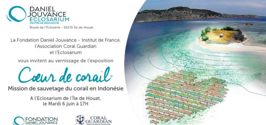 Coeur de Corail Sauvetage corail Indonesie